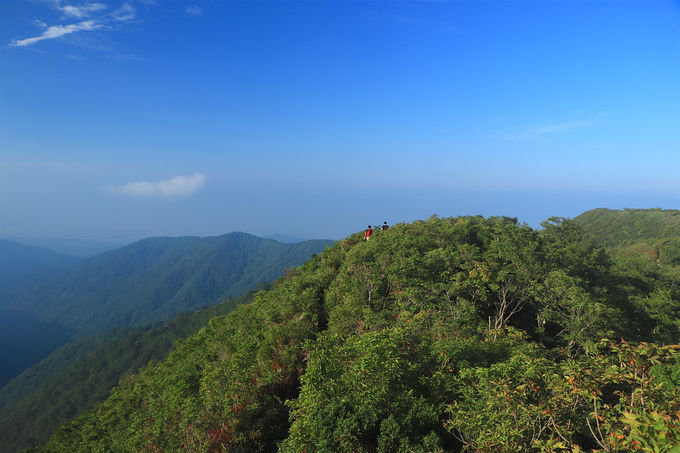 ここからが本番!「白倉岳」まで緑美しい縦走路を進もう