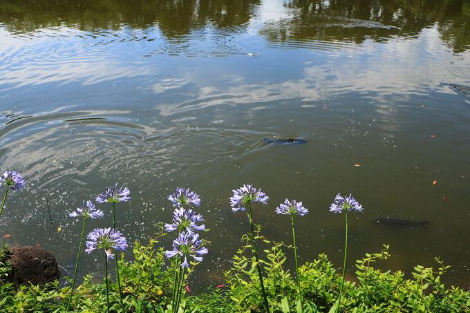 神仙を思わせる幽玄の「神池」は伊豆七不思議の一つ
