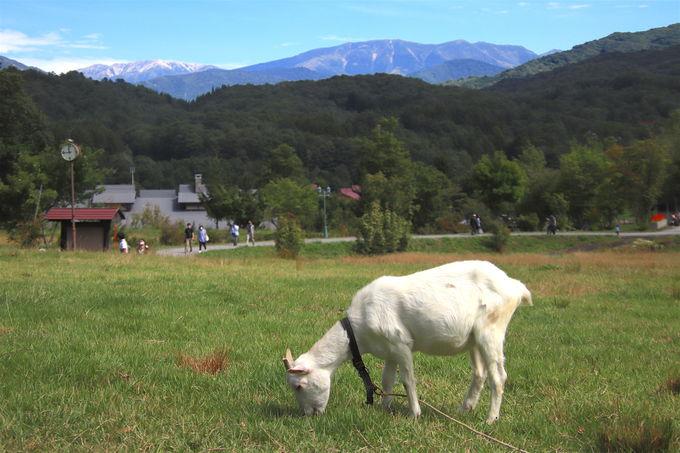 まるでハイジの世界!?天空の隠れ里「奥飛騨山之村牧場」