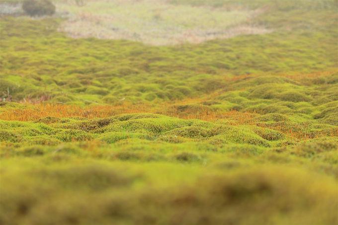 山上の別天地「イブネクラシ」!緑美しき秘境の世界を楽しむ
