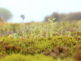 苔の絨毯が魅せる幻想風景!鈴鹿の奥座敷「イブネクラシ」登山