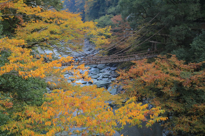 かずら橋尽くし!徳島「祖谷観光旅館」で日本三大秘境を満喫