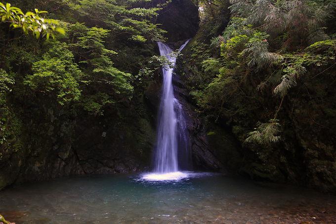 四万十川源流や名瀑も!豊かな四国山間部の自然を巡ろう