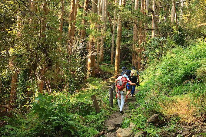 千葉にもこんな豊かな自然がある!気持ちの良い樹林帯歩き