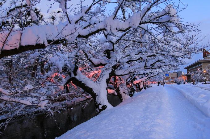 始まりが見事!モノトーンの景色の中に、桜がポツリ