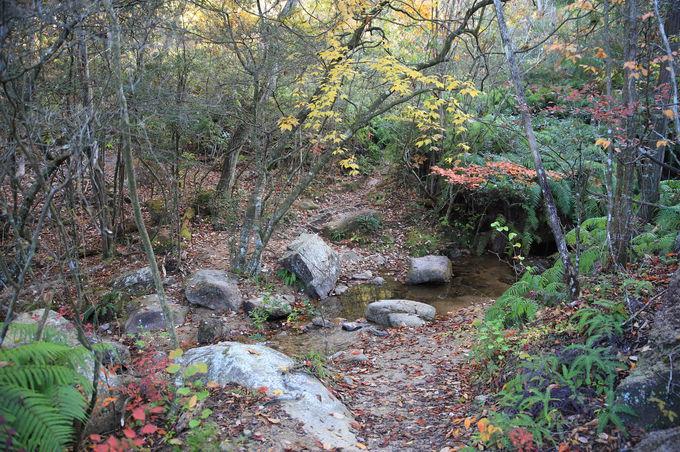 渡渉や変化に富んだ景観を楽しみつつ、落ヶ滝線を進む!