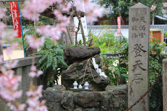 淡い紅しだれ桜覆う!日本最初の天満宮「水火天満宮」