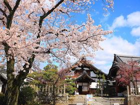 春のまるごと美術館も!京都上京区で「桜の絶景」を巡り尽くそう