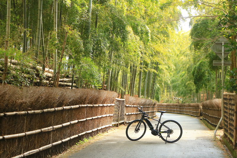 京都西山・乙訓で歴史と自然を駆け抜ける!サイクリングで竹と古刹の里を巡るおすすめコース