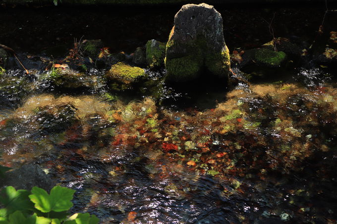 ミクロな視点で歩き回ろう。「醒井」の魅力は細部にも