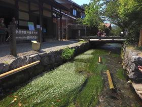 夏の滋賀「醒井」を散策。梅花藻&スイーツで涼感に浸ろう
