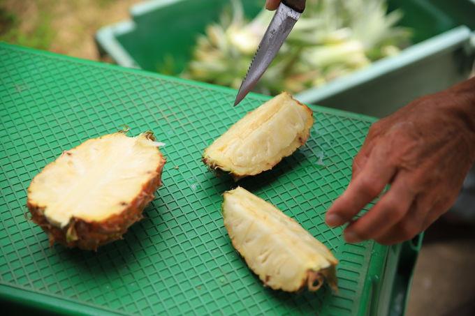 初夏が旬。「比屋定農園」で絶品パインを味見、お土産に!