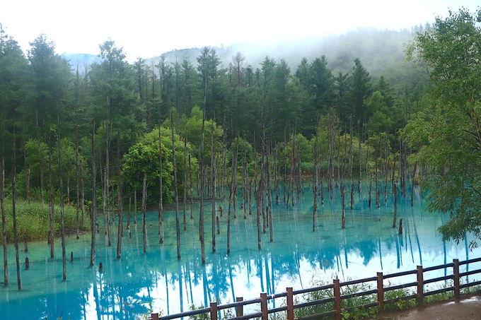 白翠色の水面と立ち枯れの幻想。引き込まれる「青い池」
