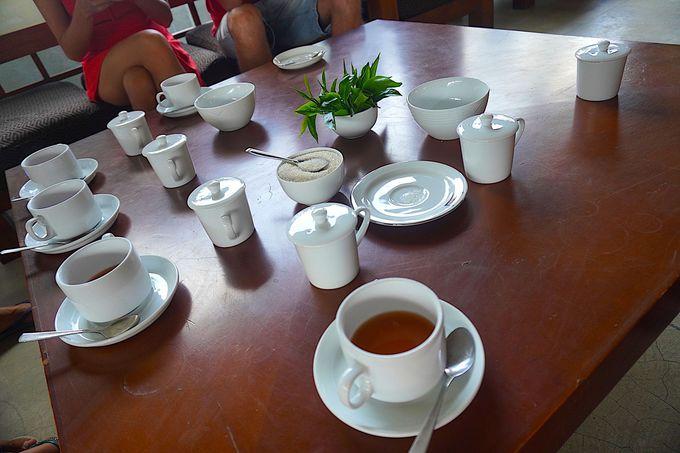 実際に作られているお茶の試飲と購入もできる