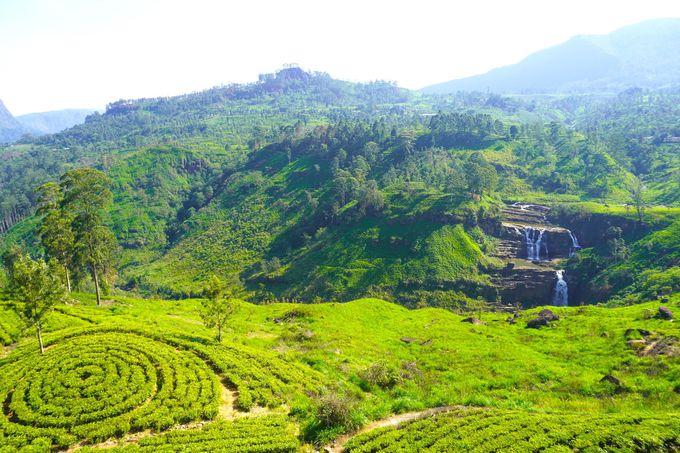 スリランカの避暑地ヌワラ・エリアにお茶工場は多い