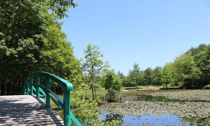 ひっそりと水をたたえる池は、草津の隠れた名所