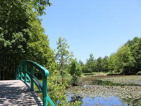 森の小道で癒し体験!草津温泉「女将と歩くロイヤルコース散策」