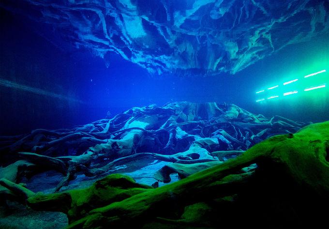 森の神秘を感じる埋没林の水中展示