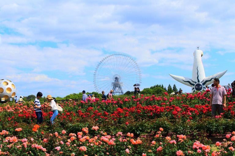 2019年4月リニューアル!万博記念公園「平和のバラ園」で癒されよう!