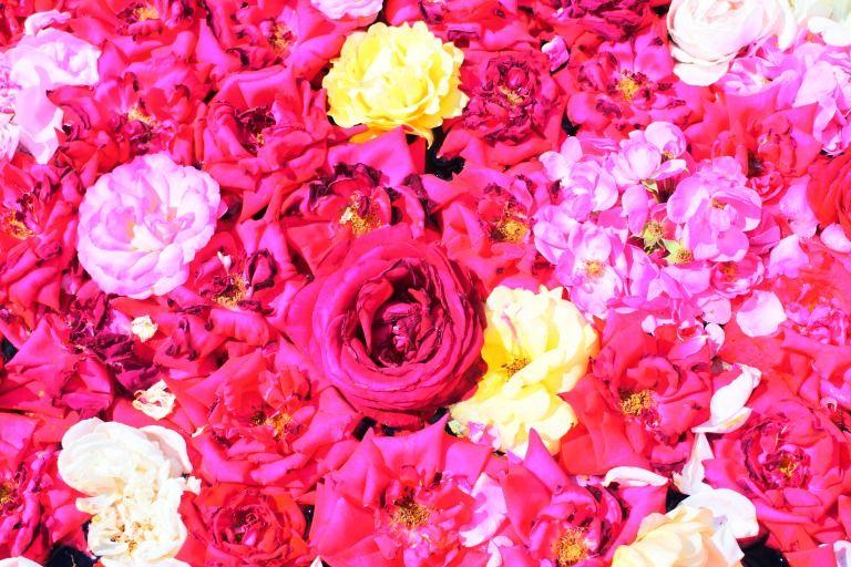 やっぱりバラはロマンチック!?