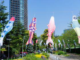 東京・六本木の大空に舞う絶景!フォトジェニックなこいのぼり