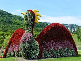旬の花が楽しめるフラワーパーク!兵庫・淡路島国営明石海峡公園