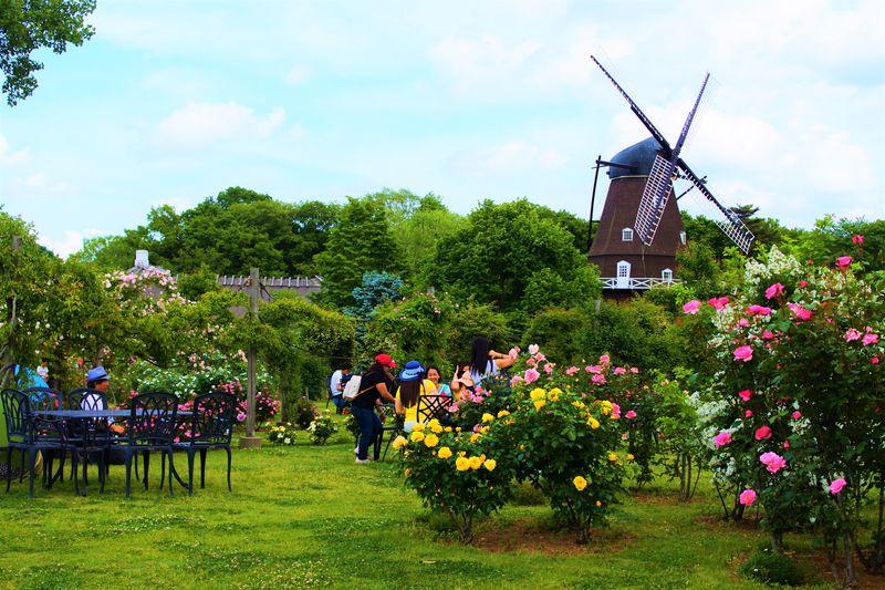 千葉・ふなばしアンデルセン公園で世界中の素敵なバラを鑑賞しよう!