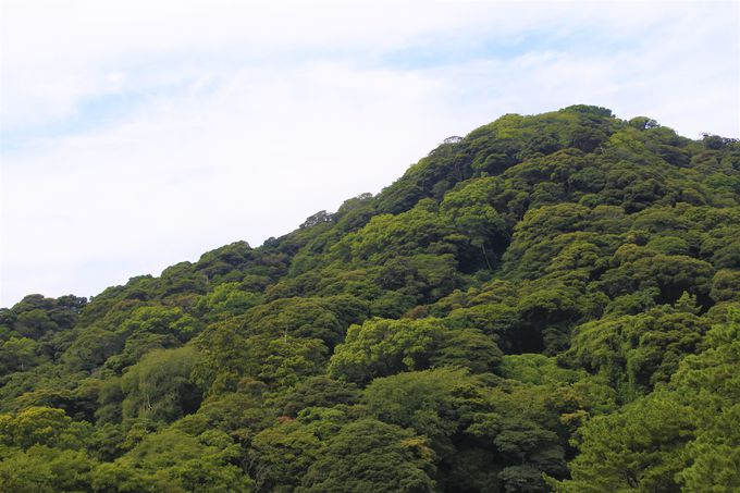 別名指月城と呼ばれた萩城!