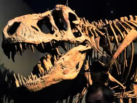 ワクワクが止まらない!世界初公開の恐竜が見られる上野「恐竜博2019」
