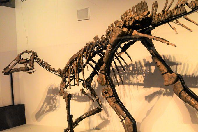 北海道で発見された「むかわ竜」