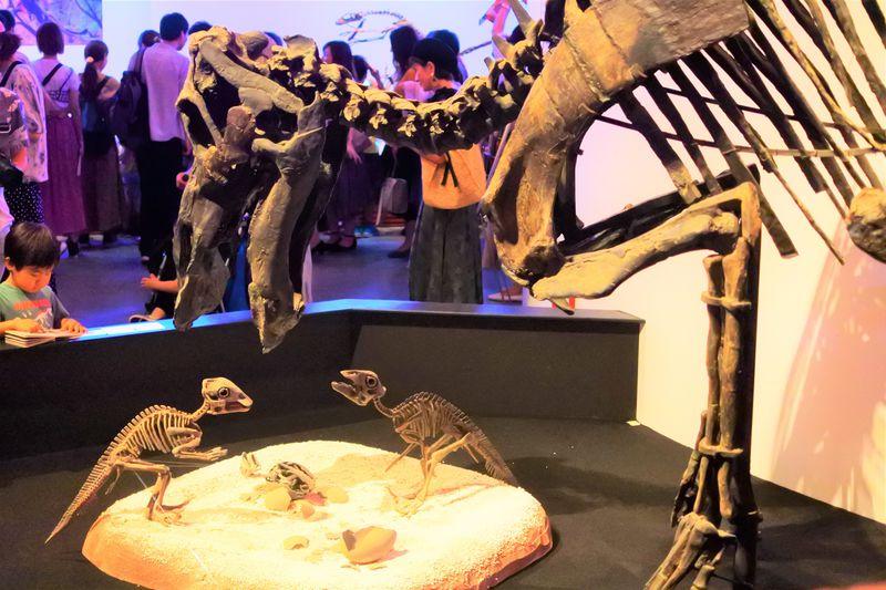 世界初公開だらけの「恐竜博2019」