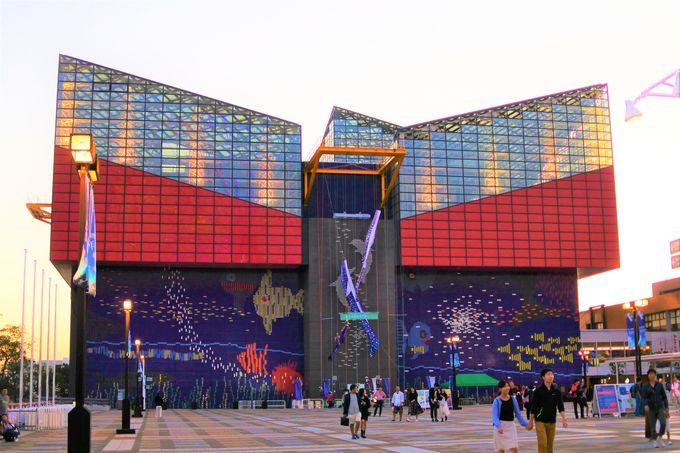 3.「海遊館」世界最大級の水槽