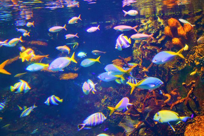 世界最大級の水族館「海遊館」