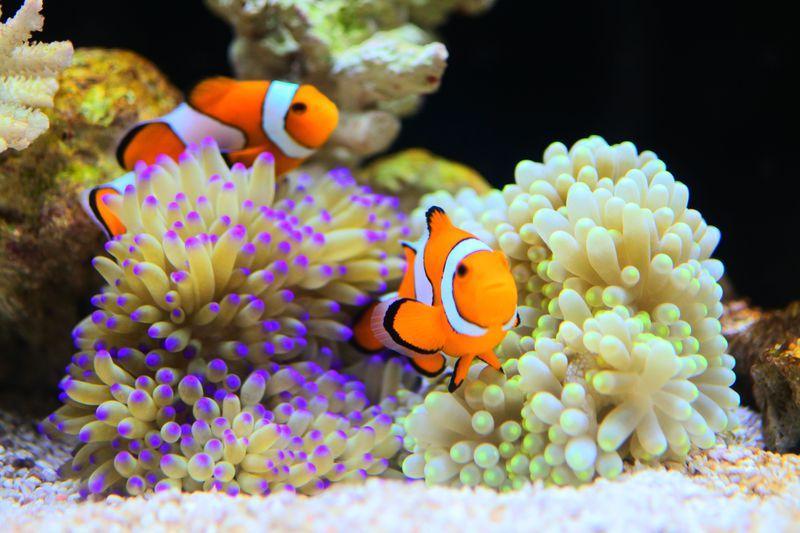 思わず虜になる!大阪・海遊館のかわいい海の生き物たち