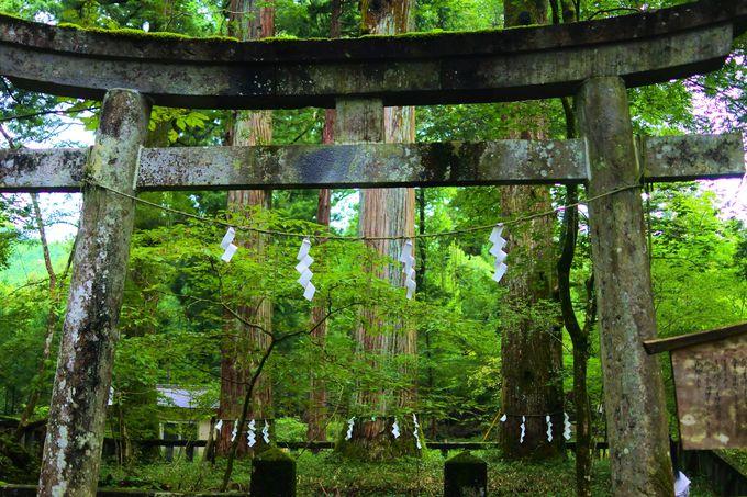 他にもある滝尾神社の見どころ!
