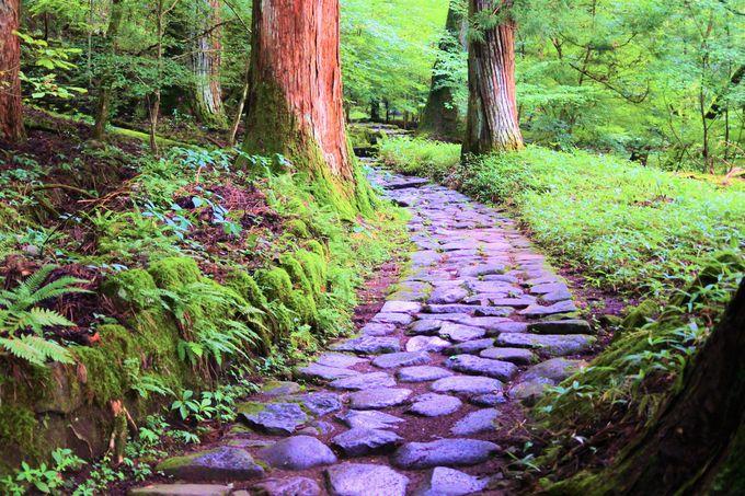 滝尾神社へと続く「滝尾古道」