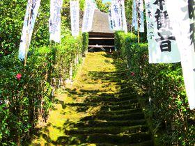 風情ある鎌倉最古の寺「杉本寺」で出会うコケの石段はまさに圧巻!
