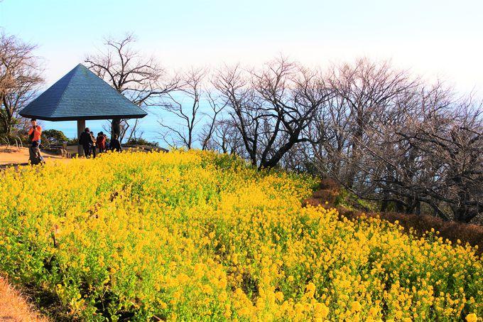 吾妻山公園へのアクセス