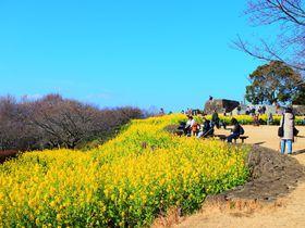 ハイキングが楽しめる神奈川「吾妻山公園」で春の訪れを感じよう!