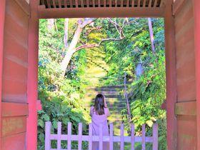美しい苔寺!討幕を成功させた護良親王が眠る鎌倉「妙法寺」
