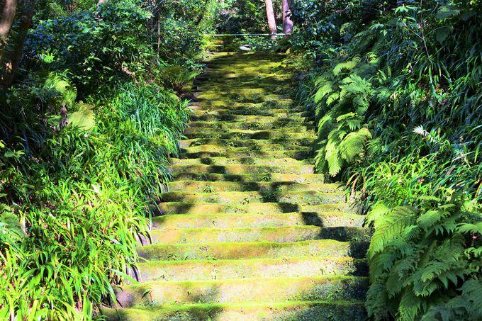 美しい苔の階段!