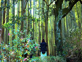 なんて美しい竹林!古都鎌倉「報国寺」で詫び寂びの世界を感じよう