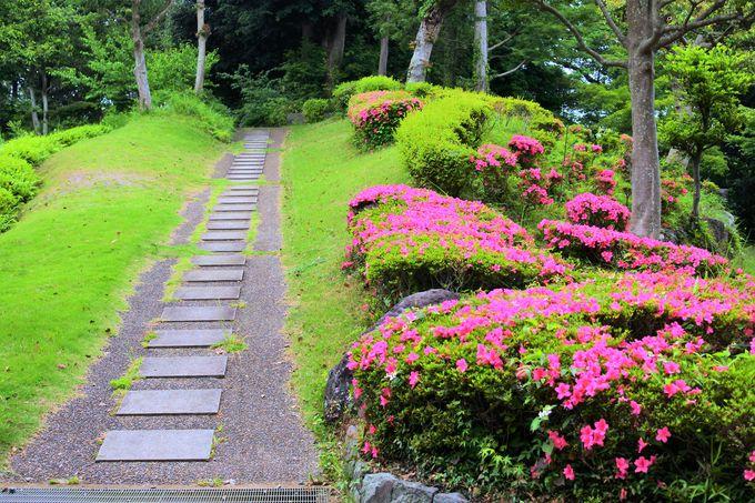 「ひかりの広場」に咲く色鮮やかなツツジ!