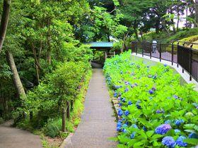 初夏に訪れたい!神奈川「大磯城山公園」紫陽花とツツジの絶景