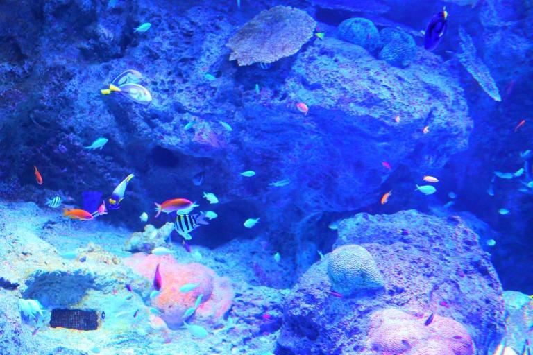 綺麗な熱帯魚が泳ぐ「リトルパラダイス」