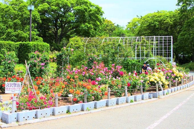 年に2回バラが観賞出来る「バラ園」