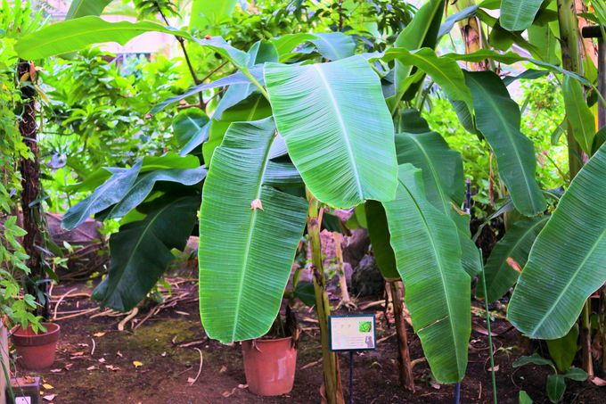日本では珍しい熱帯植物が見られる「トロピカルドーム温室」!
