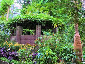 珍しい熱帯植物が沢山!一年中楽しめる「小田原フラワーガーデン」