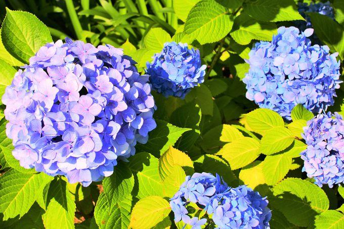 美しい四季の花々も必見!
