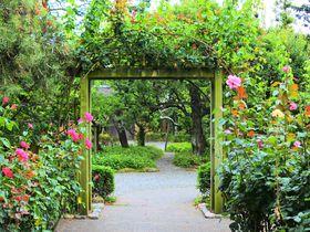 美しいバラ園と日本庭園に咲く四季の植物!大磯に佇む「旧吉田茂邸」